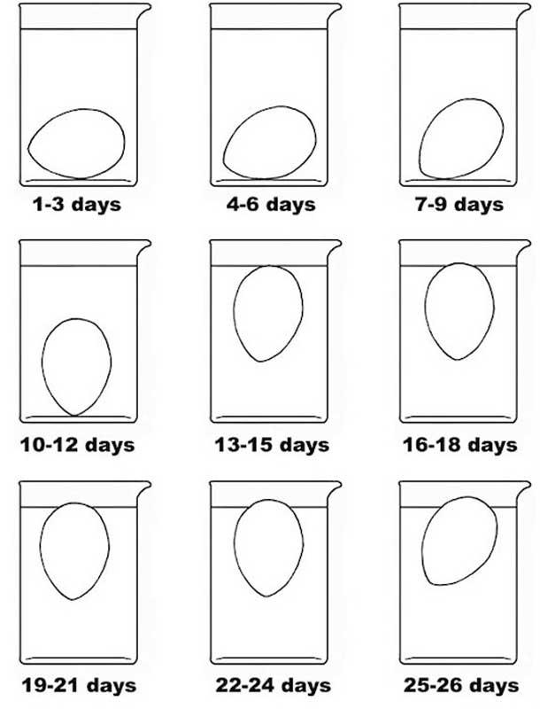 лайфхаки для кухни приготовления еды тест на свежесть яиц